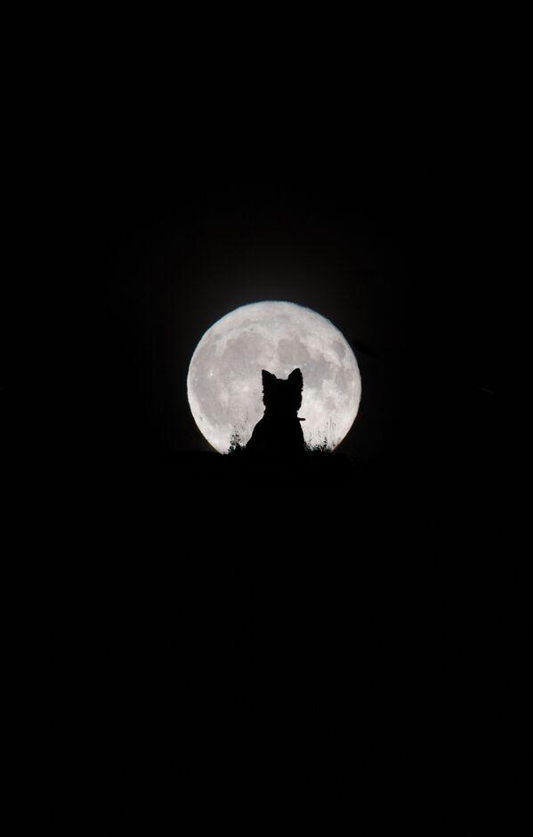 Снимок Big Moon, Little Werewolf британского фотографа Kirsty Paton из категории Our Moon, попавший в шортлист конкурса Insight Investment Astronomy Photographer of the Year 2020  - Sputnik Таджикистан