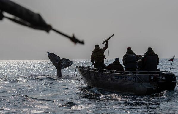 Китобои во время охоты на кита в Беринговом проливе - Sputnik Таджикистан