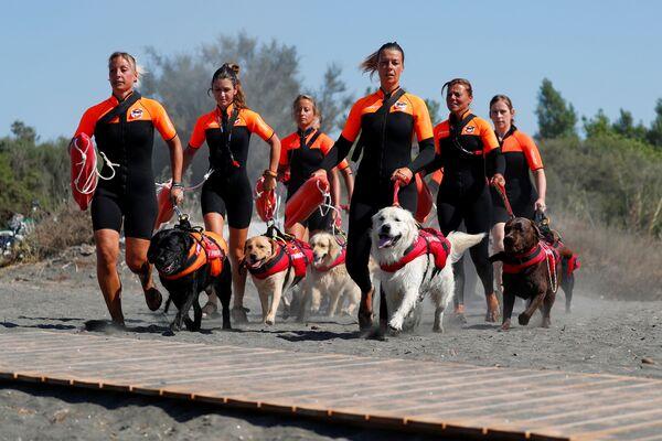 Группа итальянских женщин-спасателей со своими собаками на тренировке - Sputnik Таджикистан