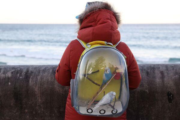 Женщина с попугаями в рюкзаке на берегу океана в Сиднее, Австралия  - Sputnik Таджикистан