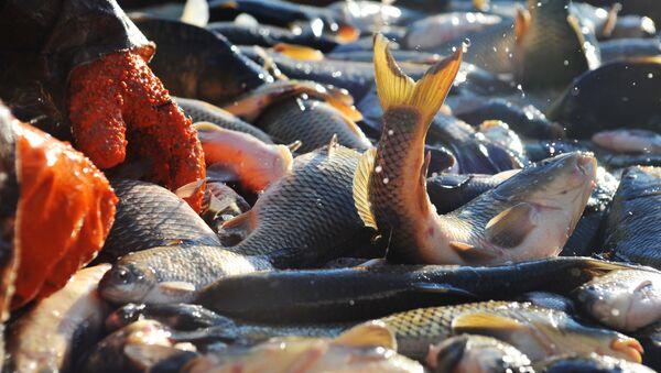 Рыбное хозяйство  - Sputnik Таджикистан