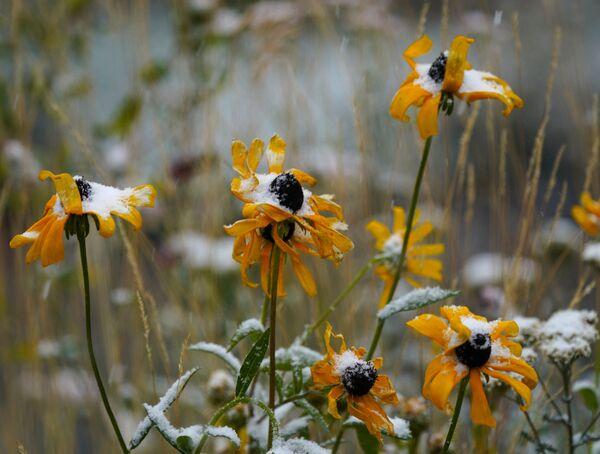 Заснеженные цветы в Джорджтауне - Sputnik Таджикистан