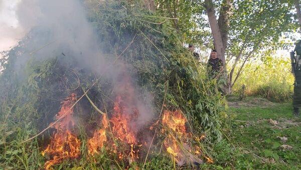 Семь тонн конопли кыргызские военные сожгли на приграничной с Таджикистаном и Узбекистаном территории - Sputnik Тоҷикистон