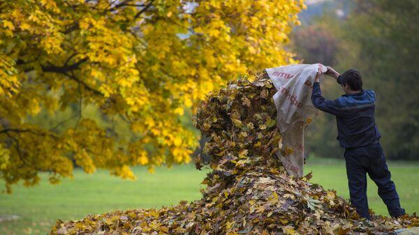 Дворник собирает опавшие с деревьев листья в парке Коломенское в Москве - Sputnik Таджикистан