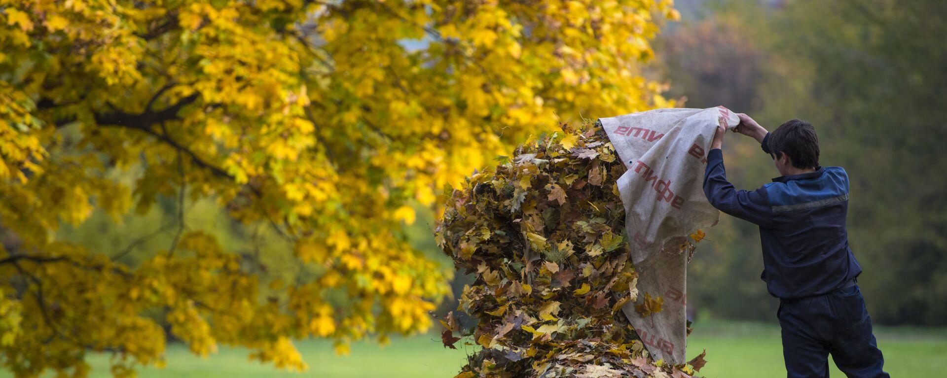Дворник собирает опавшие с деревьев листья в парке Коломенское в Москве - Sputnik Таджикистан, 1920, 30.09.2021