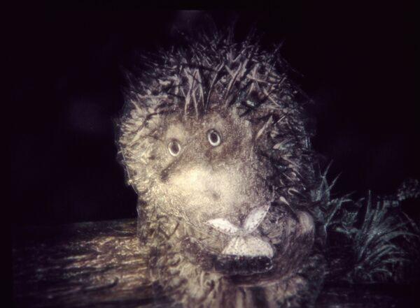 Кадр из мультфильма Ежик в тумане  - Sputnik Таджикистан