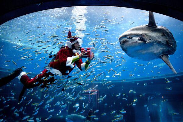 Аквалангист в костюме Санта-Клауса во время кормления рыбы в аквариуме в Японии  - Sputnik Таджикистан