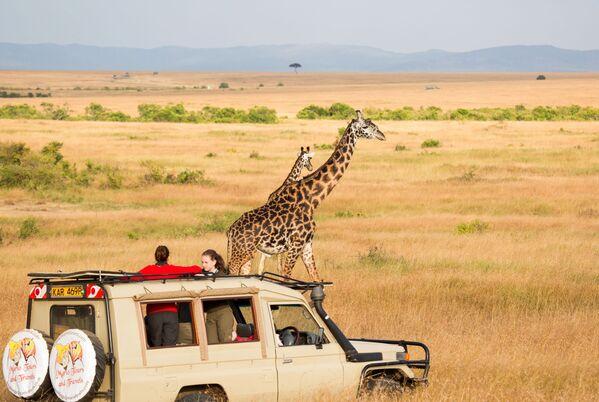 Национальный заповедник Масаи-Мара в Кении, которая получила звание World's Leading Safari Destination 2020 - Sputnik Таджикистан