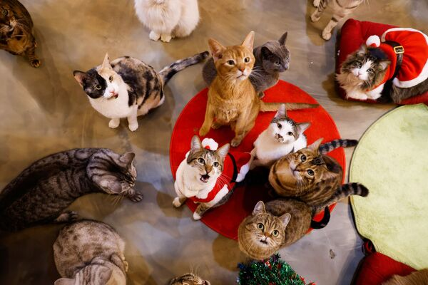 Кошки смотрят на Catgarden в Сеуле, Южная Корея - Sputnik Таджикистан