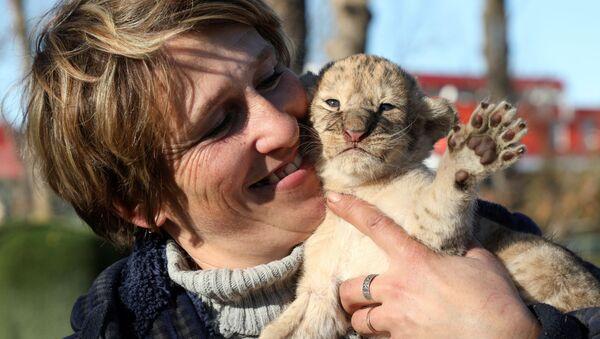 Работница парка Тайган со львенком - Sputnik Таджикистан