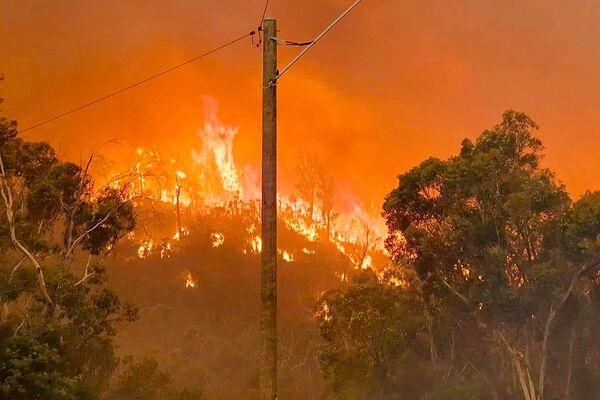 Лесной пожар на холме в Вуролоу, недалеко от Перта, Австралия - Sputnik Таджикистан