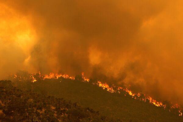 Лесной пожар, вызванный сильным ветром, в Перте, Австралия - Sputnik Таджикистан