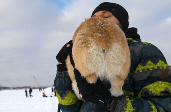 Не все корги считают, что фото анфас - это их лучшая сторона, и демонстрируют пушистый зад - Sputnik Таджикистан
