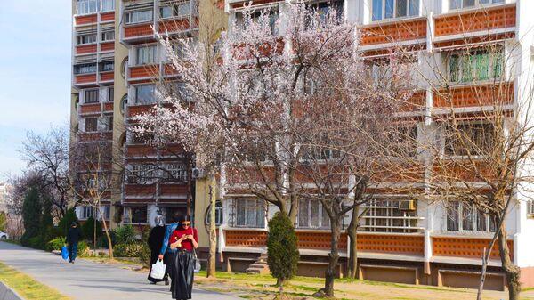 Цветение деревьев в Душанбе - Sputnik Таджикистан