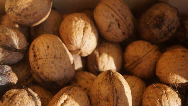 Грецкие орехи, архивное фото - Sputnik Таджикистан