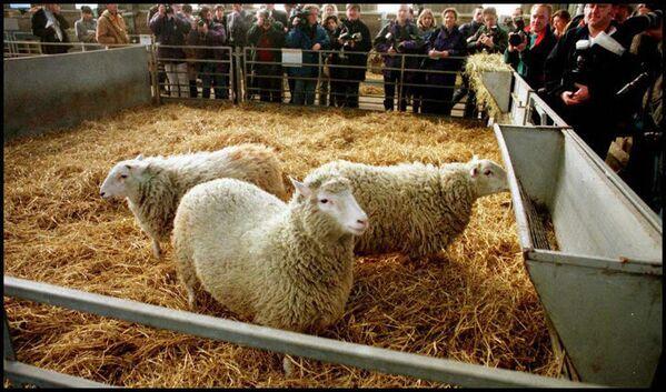 Знаменитая овечка Долли – первое клонированное животное, родилась она в 1996 году и прожила шесть с половиной лет - Sputnik Таджикистан
