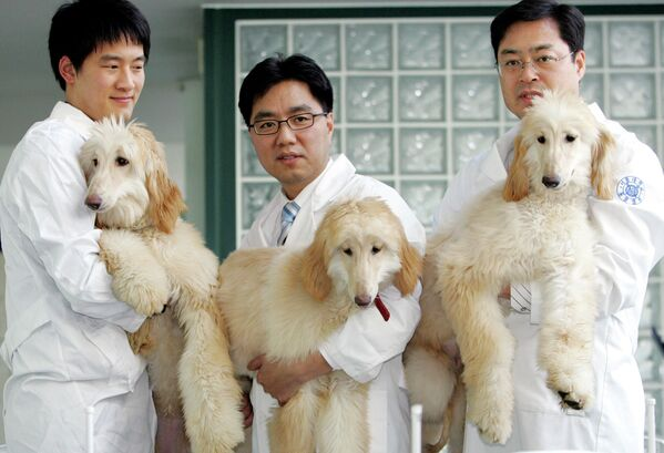 Профессор из Сеульского национального университета Ли Бен-чунь демонстрирует первых в мире клонированных собак, родившихся в 2005 году - Sputnik Таджикистан