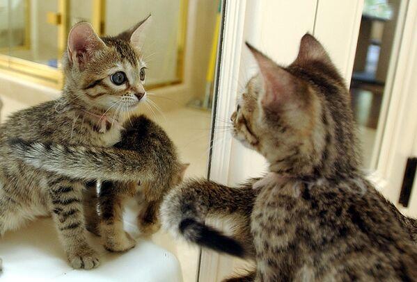 Первая в мире клонированная кошка появилась на свет в американском штате Техас в 2001 году - Sputnik Таджикистан