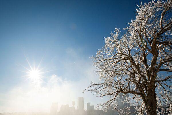 Покрытые льдом деревья в городе Ниагара-Фолс - Sputnik Таджикистан