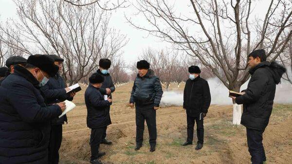 Раджаббой Ахмадзода посетил с рабочей группой поля с плодовыми деревьями - Sputnik Тоҷикистон