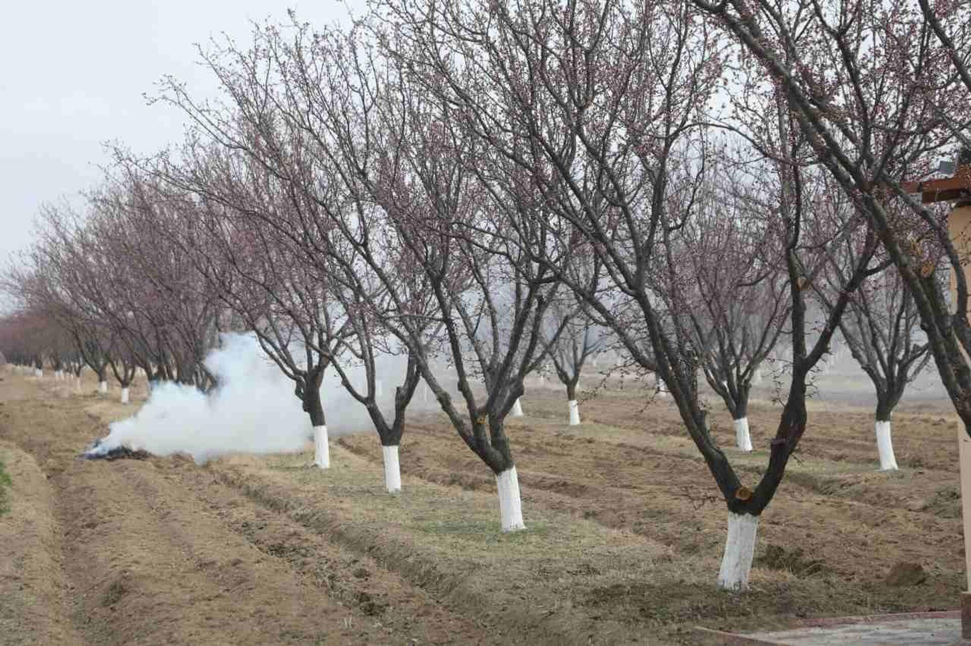 Раджаббой Ахмадзода посетил с рабочей группой поля с плодовыми деревьями  - Sputnik Тоҷикистон, 1920, 06.04.2021