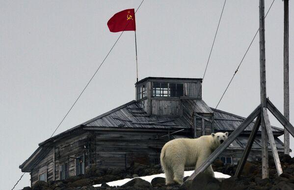 Белый медведь на территории полярной станции на берегу бухты Тихая на острове Гукера архипелага Земля Франца-Иосифа (съемка через стекло) - Sputnik Таджикистан