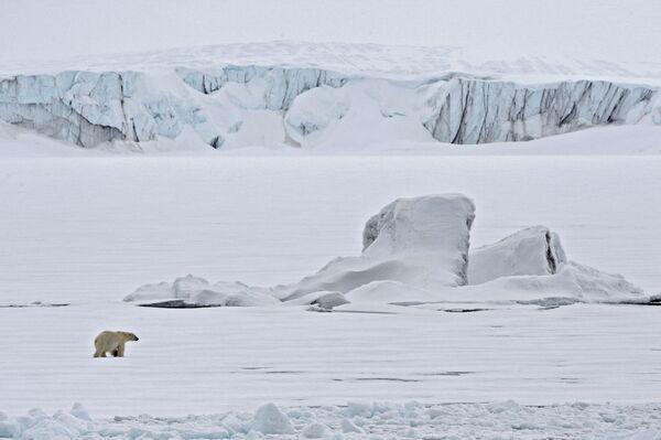 Белый медведь на льдине в Северном ледовитом океане - Sputnik Таджикистан