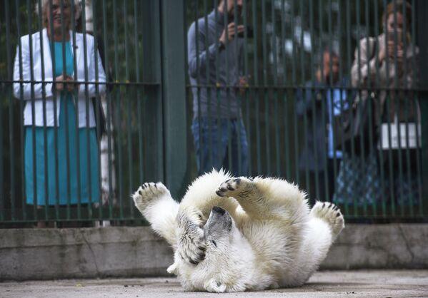 Белая медведица Умка-Аяны, доставленная из Якутии, в вольере Центра воспроизводства редких видов животных Московского зоопарка - Sputnik Таджикистан
