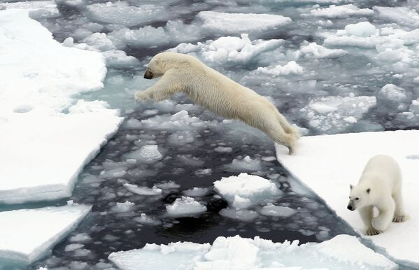 Белые медведи на льдине в Северном ледовитом океане - Sputnik Таджикистан