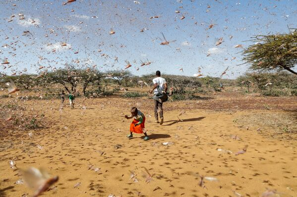 Если не принять срочные меры по борьбе с насекомыми, миллионы людей рискуют остаться практически без еды - Sputnik Таджикистан