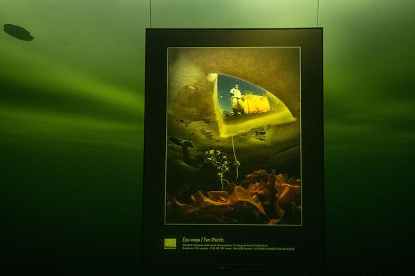 Выставка стала частью большого проекта по документированию животных Белого моря - Sputnik Таджикистан