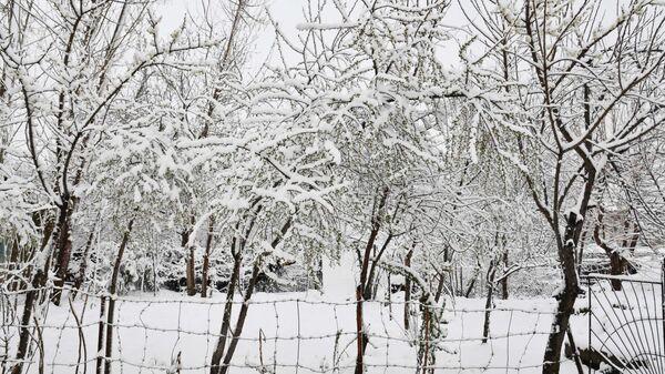 Душанбе в снегу - Sputnik Тоҷикистон