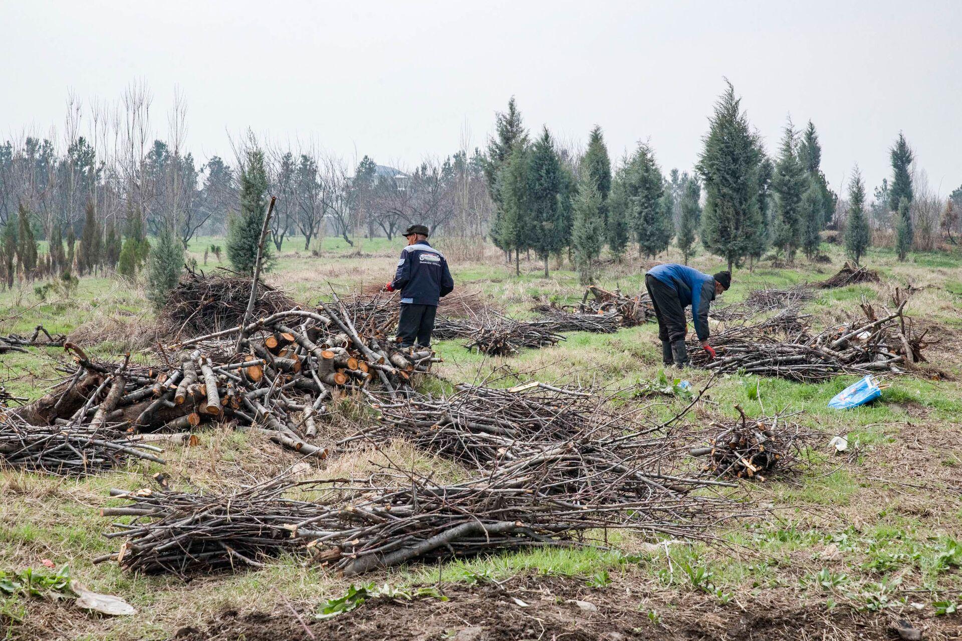 Сотрудники коммунальных служб убирают городские сады в Душанбе - Sputnik Таджикистан, 1920, 06.04.2021