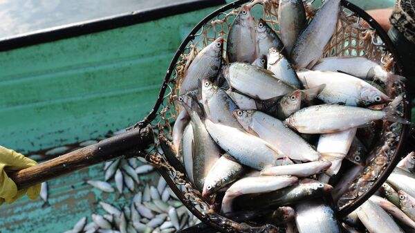 Рыбак складывает улов, архивное фото - Sputnik Таджикистан