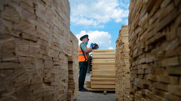 Сотрудник определяет породу древесины с помощью прибора - Sputnik Таджикистан