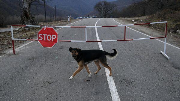 Собака на автомобильной дороге, закрытой на границе для проезда автомобилей. - Sputnik Таджикистан