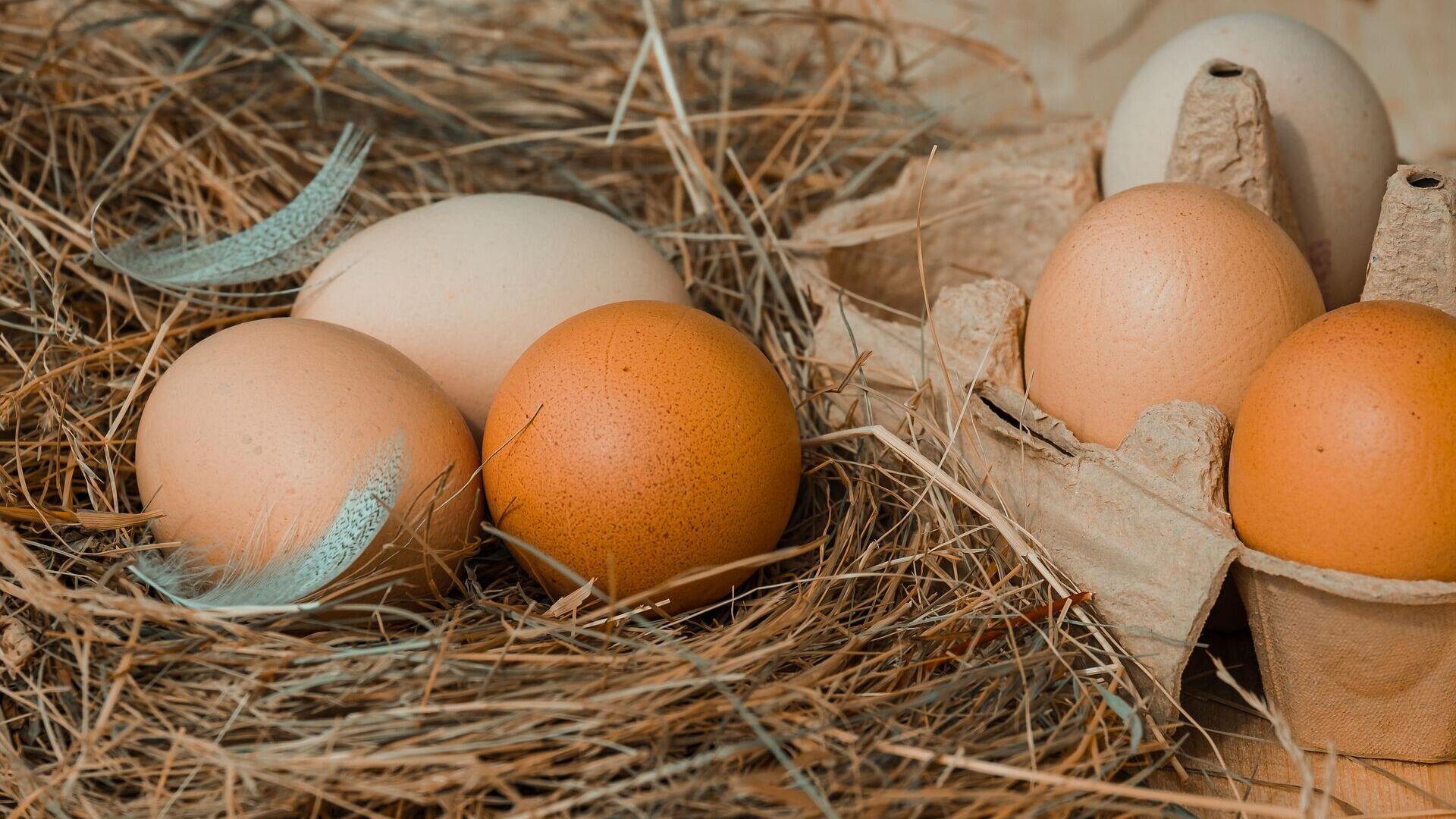 Куриные яйца - Sputnik Таджикистан, 1920, 22.09.2021