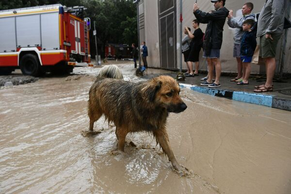 В ликвидации последствий стихии задействовали 2 068 спасателей и 342 единицы техники. - Sputnik Таджикистан