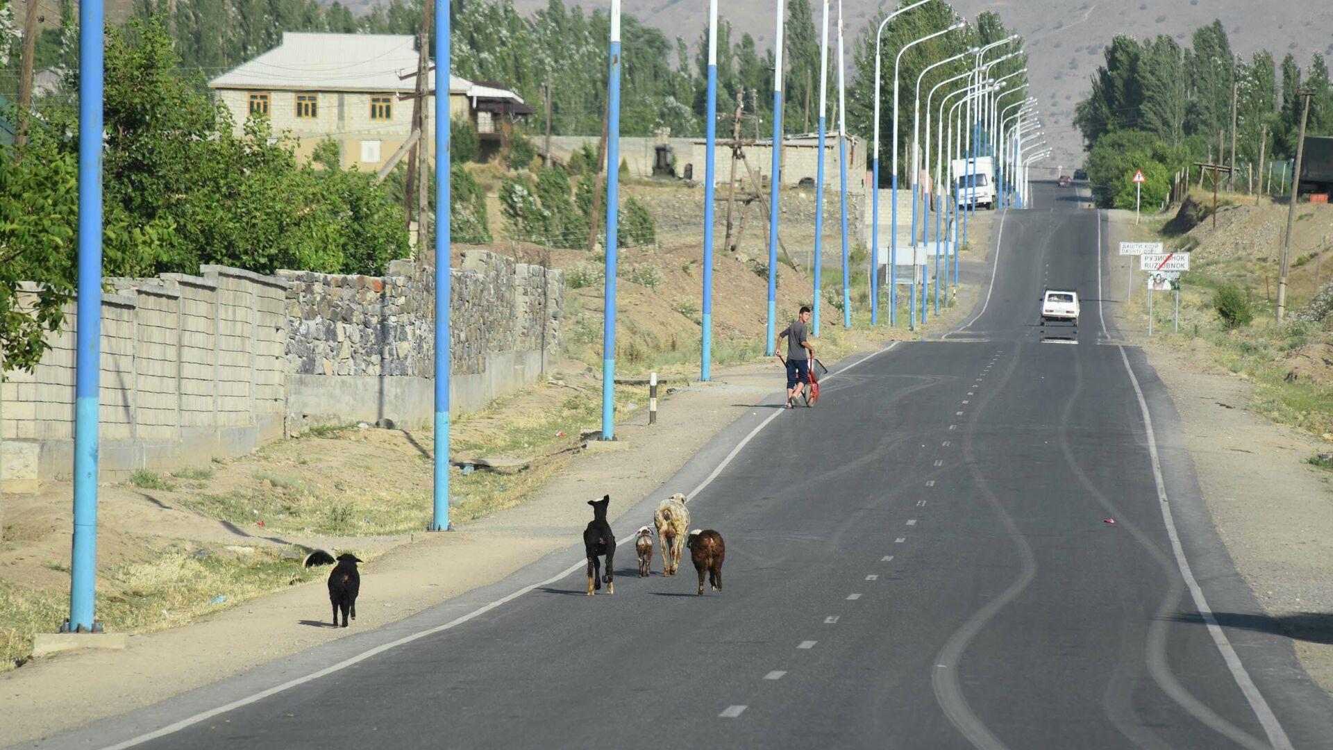 Дорога в Пенджикенте - Sputnik Таджикистан, 1920, 26.09.2021