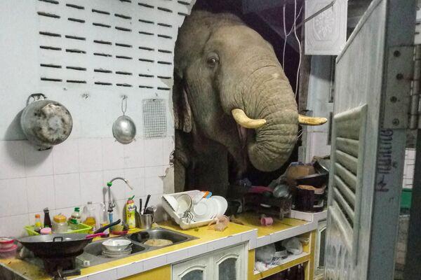 Слон проломил стену дома в поисках еды на Тайване. - Sputnik Таджикистан