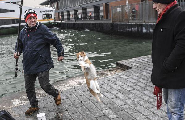Кот пытается отобрать улов у рыбака в Стамбуле. - Sputnik Таджикистан
