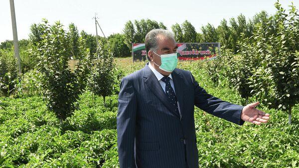 Визит президента Таджикистана Эмомали Рахмона в Согдийскую область - Sputnik Таджикистан