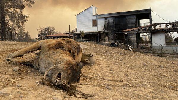 Сгоревшее животное во время природных пожаров в Турции - Sputnik Тоҷикистон
