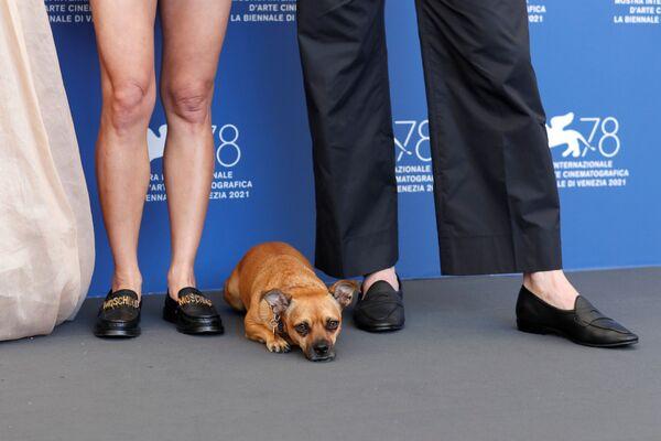 Актер Эд Скрейн и режиссер Ана Лили Амирпур позируют со своей собакой Бенни на 78-м Венецианском международном кинофестивале. - Sputnik Таджикистан