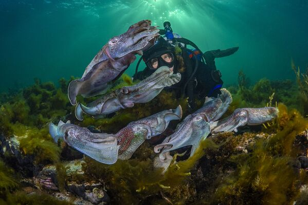 Водолаз наблюдает за брачным танцем каракатиц. Порт-Бонтон, Южная Австралия. - Sputnik Таджикистан