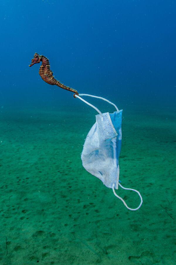 Отпечаток пандемии коронавируса - морской конек цепляется за маску для лица. Стратони, Греция. - Sputnik Таджикистан