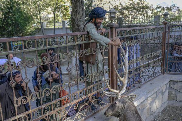 """Боец """"Талибана""""* держит оленя за рога в вольере в Кабульском зоопарке. - Sputnik Таджикистан"""