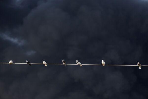 Голуби сидят на линиях ЛЭП во время пожара на нефтяном предприятии в Захрани. - Sputnik Таджикистан