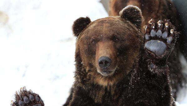 Медведь, архивное фото - Sputnik Таджикистан