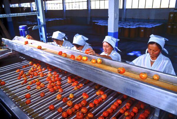 Конвейер на андижанском заводе по переработке помидоров в томатную пасту. Архивное фото - Sputnik Таджикистан